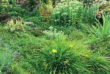 507 Outdoor Landscaping / by Holly Brousseau