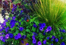 Gardening / by Barbara Freeling
