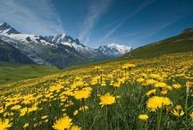 Alpine Europe