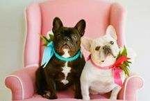 Aww! / adorable wedding pictures