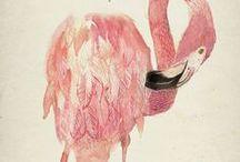 Pink Flamingos   / pink flamingoes