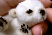 Adorable Animals / Precious little animals to hold and to love <3  / by Judy Lehman