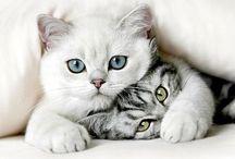 Kute Kitties