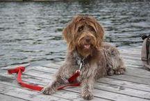 Next doggie / a girl's best friend