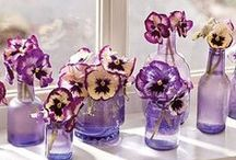 Pansies / Pretty pansy pictures