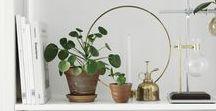 indoor plants / #ethnic #styling #design #interior #scandinavian #eclectic #plants #flowers #green