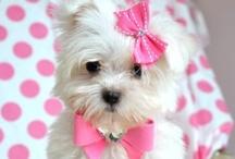 Pretty Pets / by Elizabeth Kissner