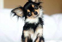 P U P P Y • L O V E / All things doggie!