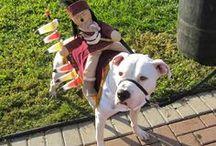 Pet Seminoles / Even our four-legged friends love the 'Noles!