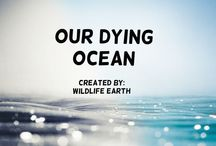 Our Dying Ocean! / This group board is dedicated to creating awareness about our slowly dying ocean! By joining, you can help save the ocean! -Wildlife Earth