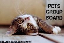Pets Group Board / This group is created to pin all the wonderful pets  of the world! (Please only pet pictures AND pin only high quality pictures.) Thanks!