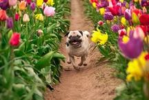 Fur and Flowers / Celebrating pets in springtime.