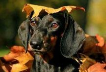 Fall For Your Pet / Autumn is a perfect season and is enjoyed even more with pets!