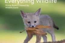 Everything Wildlife / Welcome to Everything Wildlife, where you can pin anything relating to wildlife like... wildlife news, rights, pictures, conservation, etc. - Wildlife Earth