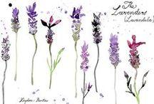 Plantes & remèdes / Plantes, infusions, huiles essentielles pour soulager les maux