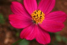 Цветы Доминиканы / Flores / Flowers