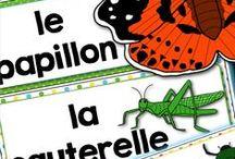 Les insectes / Activités pédagogiques reliées au thème des #insectes au #primaire. Mots de vocabulaire, mot-étiquette, TBI, TNI, Cahier interactif, etc.