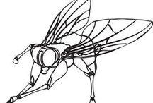 """mosca / the fly / Bisognerebbe scegliere la mosca a simbolo della sfacciataggine e dell'insolenza degli stupidi. Infatti, mentre tutti gli animali temono più di tutto l'uomo e lo sfuggono già da lontano, la mosca gli si posa sul naso. Arthur Schopenhauer, Parerga e paralipomena, 1851  """"Chi rende ardita l'umile mosca nella foschia fosca nella notte losca... e fa sì che un moscerino la paura mai conosca?"""""""