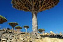 alberi / trees / l'esplosione lentissima di un seme. Bruno Munari