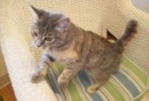 Cat Boarding / Happy Tails Spa Frisco cat boarding pics and info