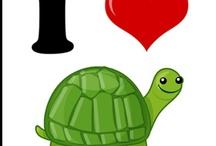 Tortues / turtles / Tortues en tout genre.