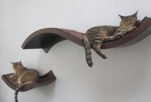 Chats et chatons : sur pattes