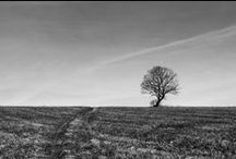 Landscape / FREE BLACK & WHITE PHOTOS FOR ALL  UNDER THE PUBLIC DOMAIN DEDICATION