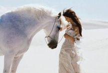 Horse Couture / Horses used in high fashion, advertising, weddings and photo-shoots.
