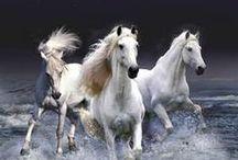 The White Horse of Rev19 / White horse of Revelation 19