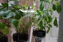 Gardening - Tips & Tricks