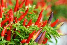 Gardening - Herbs, Fruit & Veg