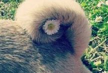 Cute Puggies