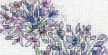 fiori umbrelliferi