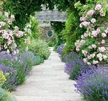 Somerset gardens / Beautiful and inspiring gardens in Somerset.