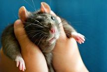rats / by Franzi Pantz