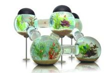 Fish bowls / uh...fish bowls