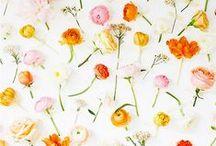 fleurs / fleurs flowers fleurs