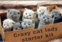 my career as a CATLADY...