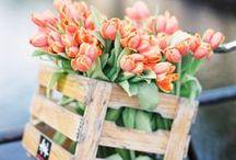 Spring. / Spring, flowers, bloom, fresh, new, tulips, easter