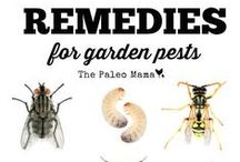 Garden Pest Control / Natural-based methods to control common garden pests