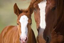 Horses / by Deborah Colebeck