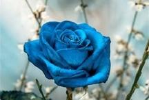 Study of Blue
