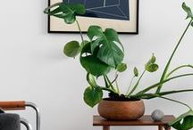 OUR HOUSE | Plants and Art