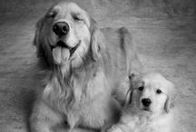 Dogs / by Alexa