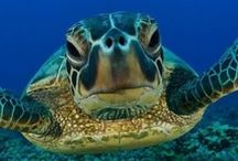 Misteri del Mare  / #mare #creature #abissi