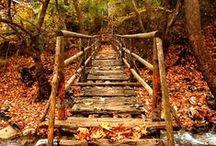 autumn in it's beauty...