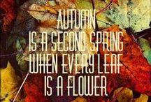 Fall ☔