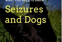 Animal Health -Furever Haus / Healthy Animals - How can you keep your animals healthy.  Lots of great advise tips to help you and your pets.