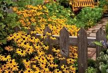 Garden: fences & gates