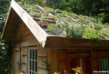 Gardening: living roofs